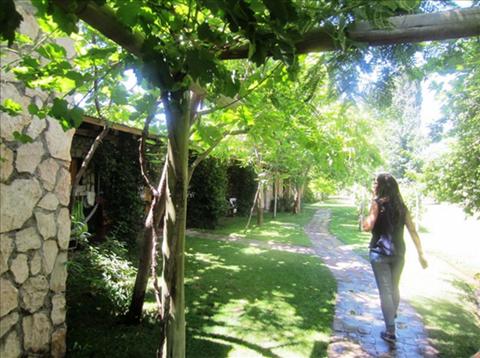 アルゼンチン、メンドーサ州ワイン特徴