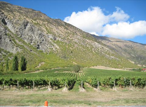 ニュージーランド、セントラルオタゴワイン特徴3