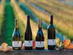 ニュージーランドのワイン事情を見てみよう!