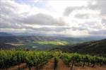 コルチャグアヴァレー産のワインの特徴とは?