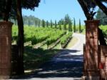 カリフォルニアワインの特徴。偉大なアメリカワインはここから